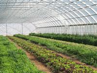 خلاصه طرح توجیهی احداث مجتمع پرورش گلخانهای گل و صیفی جات با هدف صادرات- زمستان 96