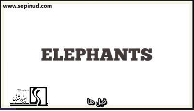 فیلها(Elephants)