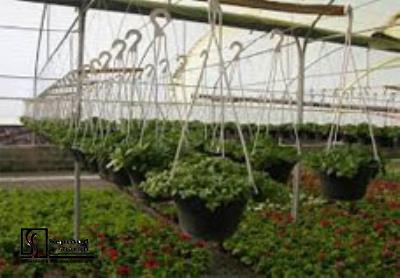Feasibility study of Greenhouse complexes to produce farm production