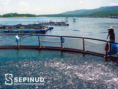 Feasibility Study of Establishing a Fish Farming ...