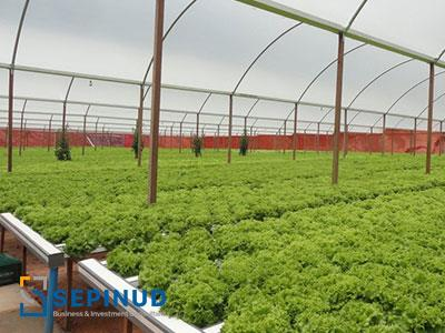 Feasibility Study of Establishing Greenhouse Complex For Growing Plants, Vegetables and Flowers with aim of Export