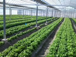 Greenhouse complexes to produce farm production
