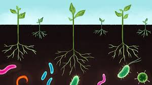 micro biologyk fertilizers