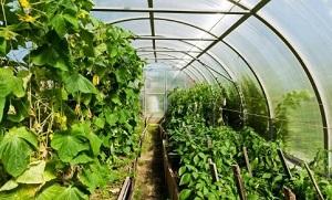 طرح توجیهی احداث گلخانه